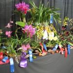 A & P Orchids