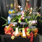 Mass. Orchid Society