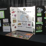 Orchid Education