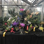 MASS ORCHID SHOW COS DISPLAY NOV 2017